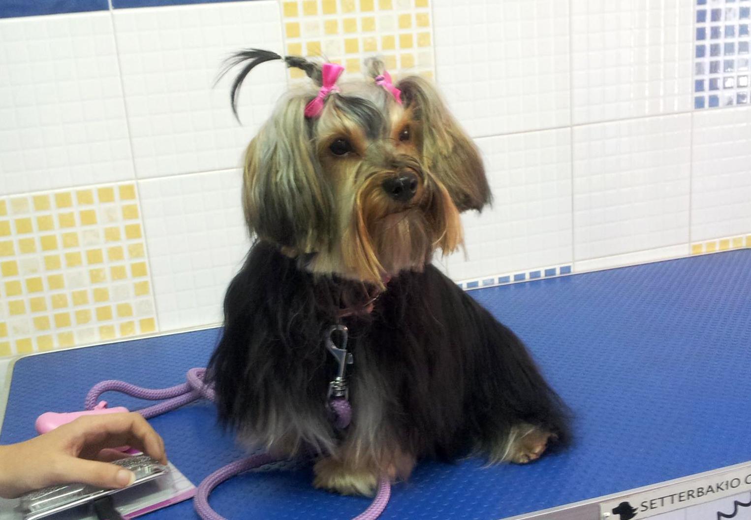 servicios veterinarios peluquería canina