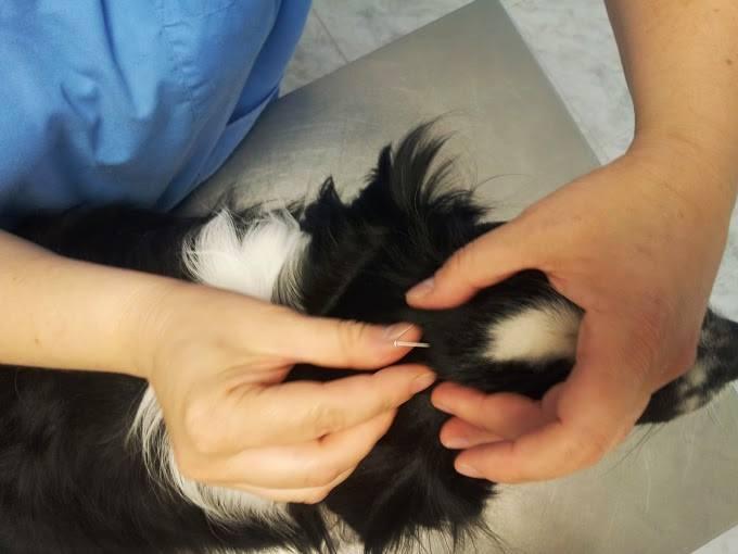 servicios veterinarios acupuntura