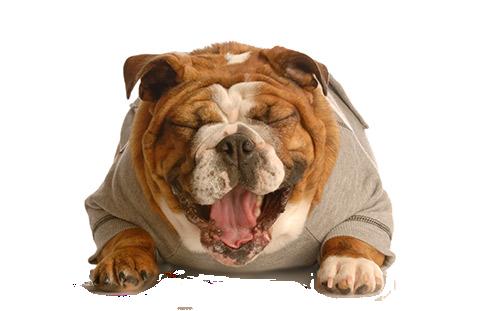 servicios veterinarios fisioterapia