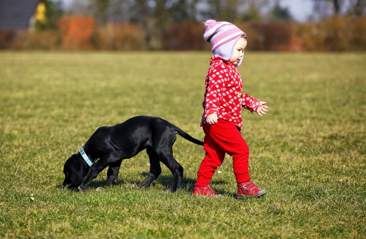 Bebes, niños y perros