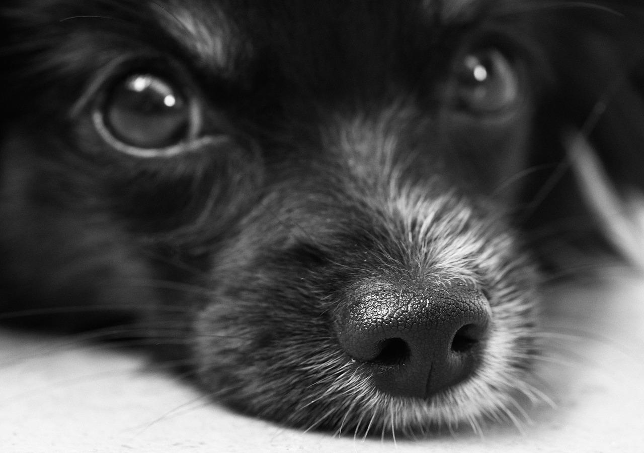 Seminario «Miedos en Perros»