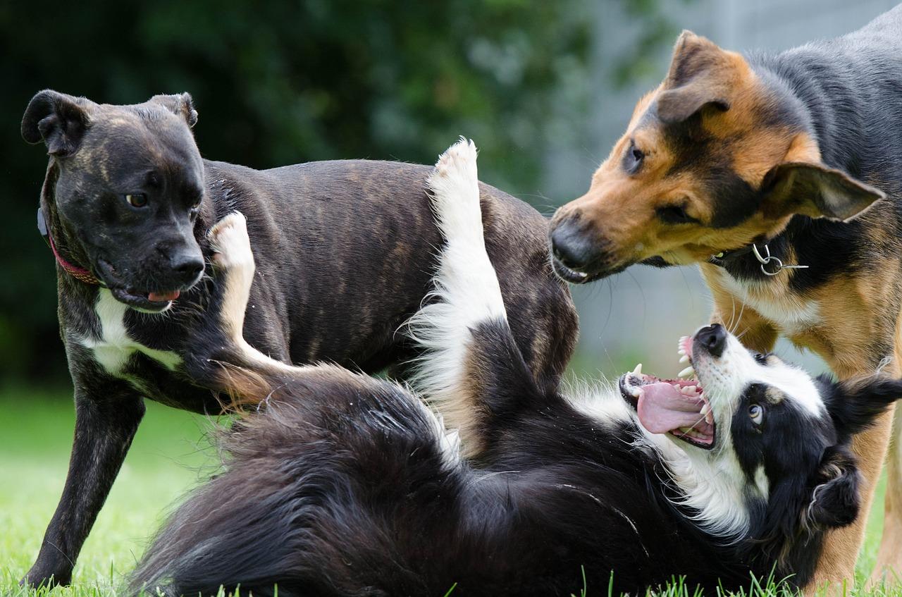Consejos antes de acudir al parque canino