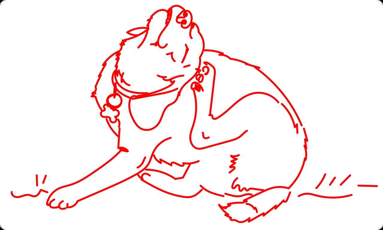 Zoonosis en animales de compañia