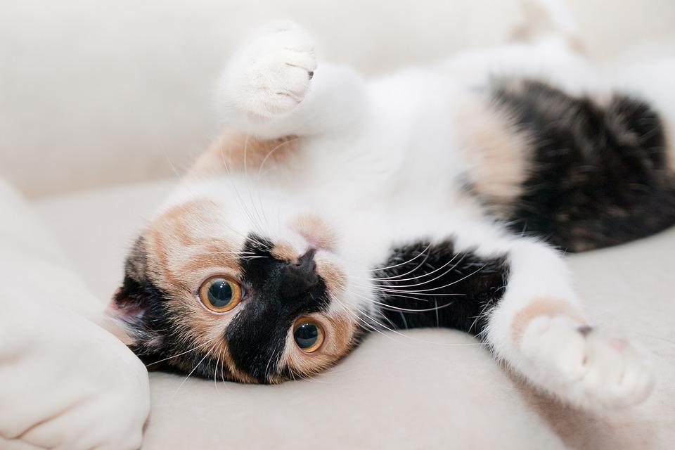 Trastornos del desarrollo en un gato