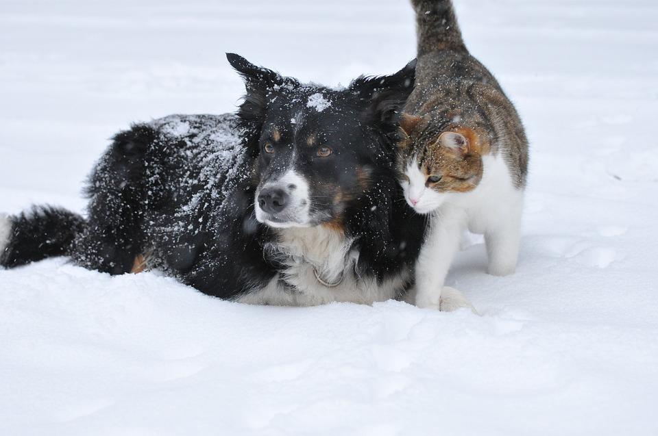 Consejos para el cuidado de tu mascota en invierno