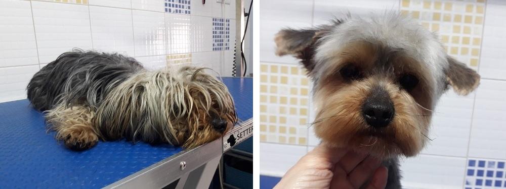 Peluquería canina: antes y después