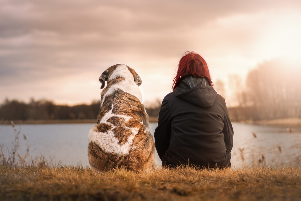 Tenencia responsable de animales de compañía