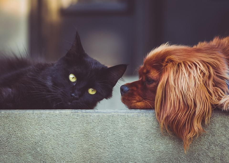 Hiperinmunización en perros y gatos: ¿vacunas sí o no?