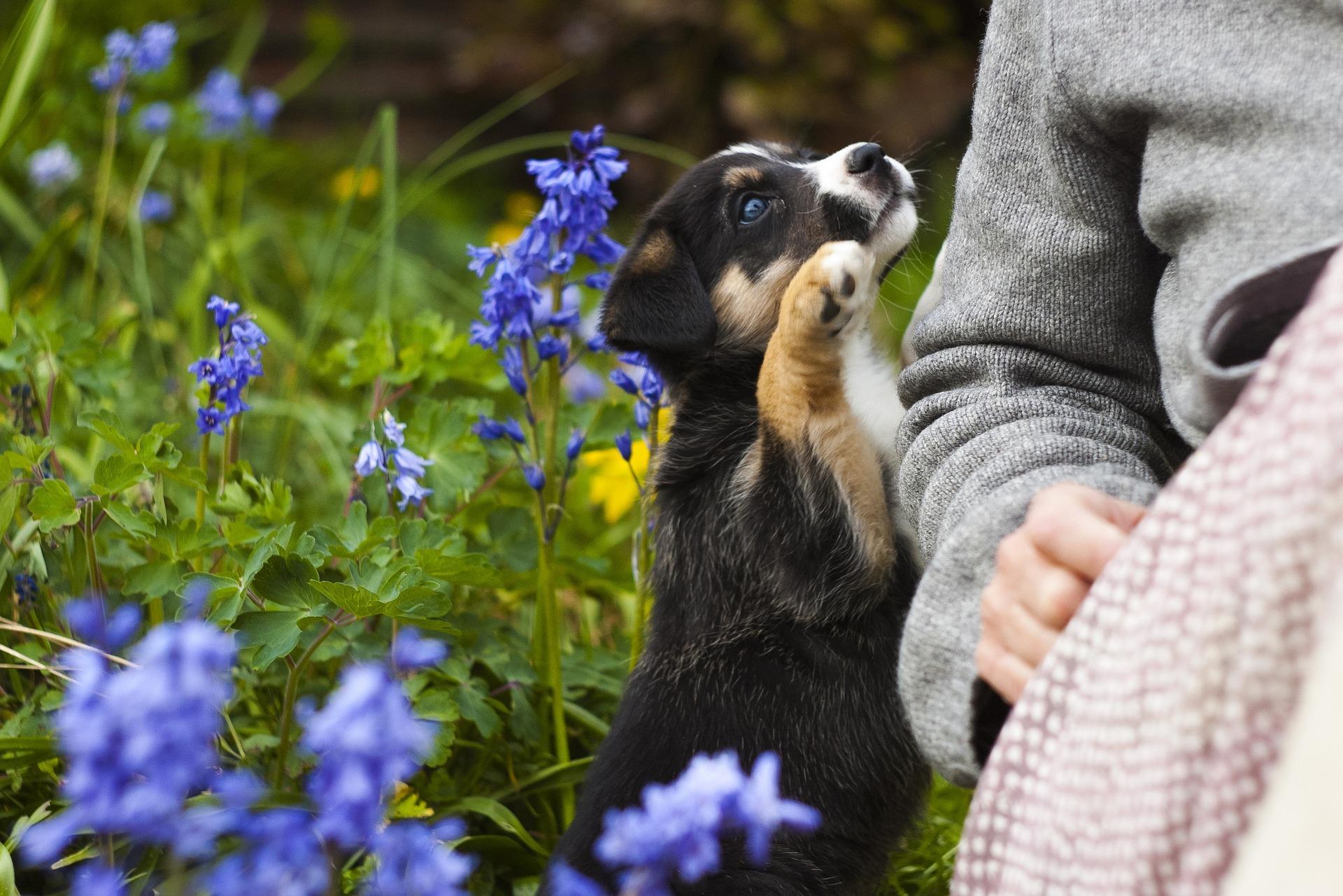 Fitoterapia: terapia natural respetuosa con tu mascota