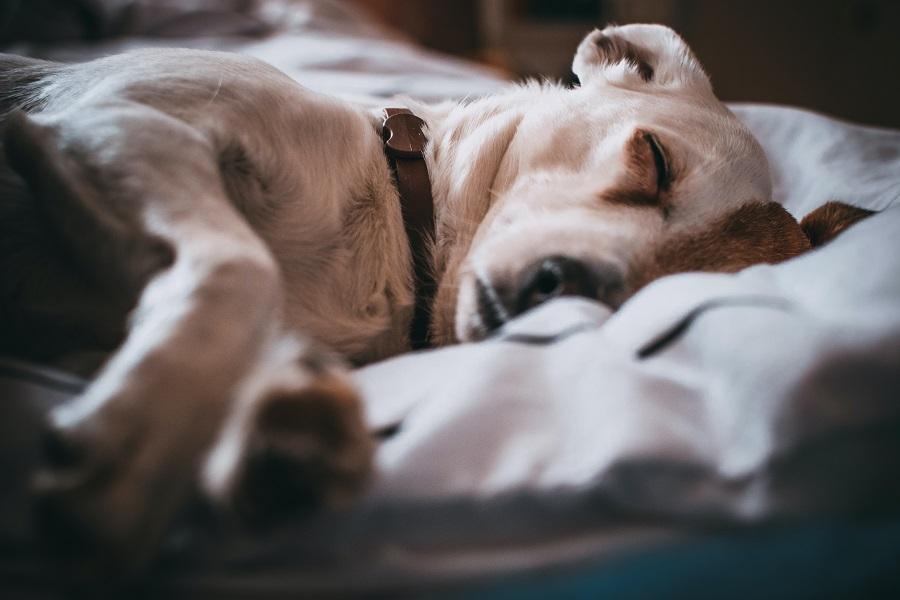 Medicina veterinaria holística, la alternativa a la medicina convencional