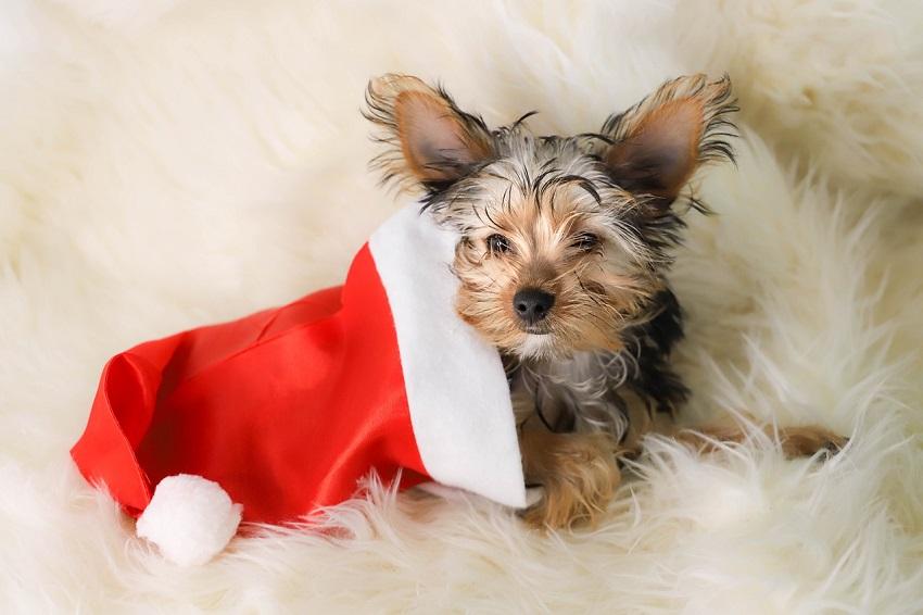 Un cachorro no es un juguete navideño